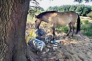 Nederland, Nijmegen, 26-7-2006Een wild Konik paard in natuurgebied de Stadswaard, wat ligt op een steenworp van de stad, snuffelt bij de Waal aan achtergelaten afval en etensresten van recreanten. Het vuil wordt geproduceerd door mensen die hier in de avond barbequen of zwemmen. De grote hoeveelheid rotzooi wekte de verontwaardiging van velen. Vrijwilligers ruimen de troep soms op.Foto: Flip Franssen