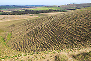 Terracettes on steep scarp slope chalk  landscape, near Cherhill, Wiltshire, England, UK