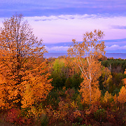 Fall Trees Illuminated By Sunrise