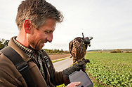 Falconer Vladimir Garaj checks the flight speed of an 18-month old Saker Falcon (Falco cherrug), from a small GPS unit attached to the bird, near Rosenburg, Walviertel region, Lower Austria © Rudolf Abraham