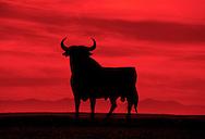 Osborne Bull Sign , Spanish National Momunent , few left on the Spanish roadsides ( sunset passion animal bullfighting ) .La Muela Zaragoza Spain.© Kike Calvo - V&W