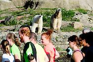 ROTTERDAM - Harlopen door de dierentuin blijdorp Diergaarde Blijdorp (dat is de kant van het Oceanium)  dier dieren copyright robin utrecht