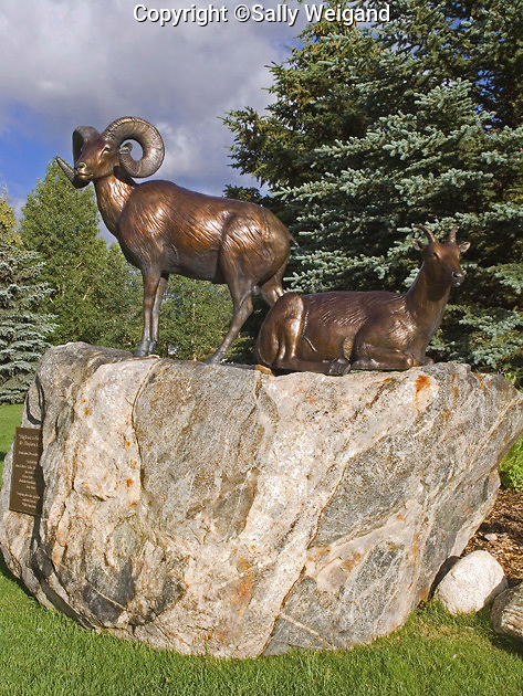 bronze sculpture, male & female Bighorn Sheep