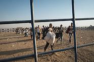 Kobane refugees