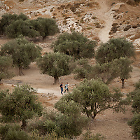 Walking through an olive orchard outside of Beit Sahour, the West Bank.