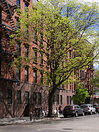 Tree in front of a building on Washington street at Horation street in the meat packing district of Manhattan.