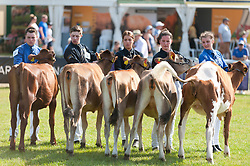 © Licensed to London News Pictures. 25/07/2019. Llanelwedd, Powys, UK. RWAS/Marks & Spencer Young Cattle Handlers Competition - Beef takes place  on the last day of the 100th Royal Welsh Agricultural Show. Founded in 1904, the Royal Welsh Agricultural Show is hailed as the largest and most prestigious event of its kind in Europe, with in excess of 200,000 visitors usually expected for the annual four day show period. Photo credit: Graham M. Lawrence/LNP
