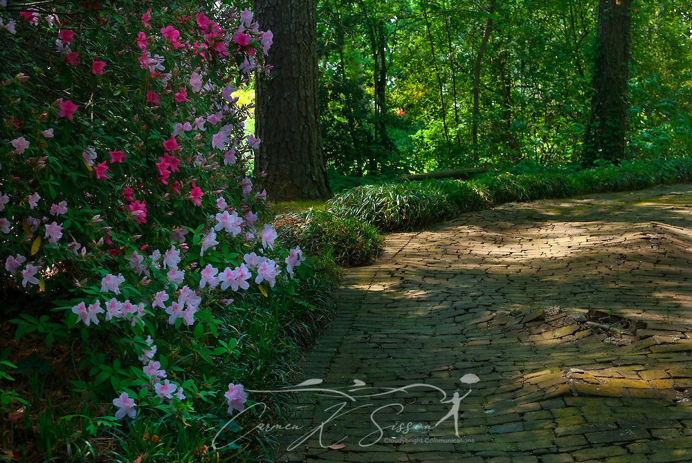 Pink azaleas line a shaded path in the gardens of Rosewood Manor in Columbus, Miss. April 16, 2010. The Greek-Revival antebellum home was among nearly two dozen on tour during Columbus' annual Spring Pilgrimage. (Photo by Carmen K. Sisson/Cloudybright)