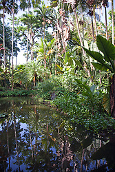 Reflections, koi, and foliage highlight Lily Lake at Hawaiian Tropical Botanical Garden, on scenic loop of Highway 19, north of Hilo, and on Onomea Bay.