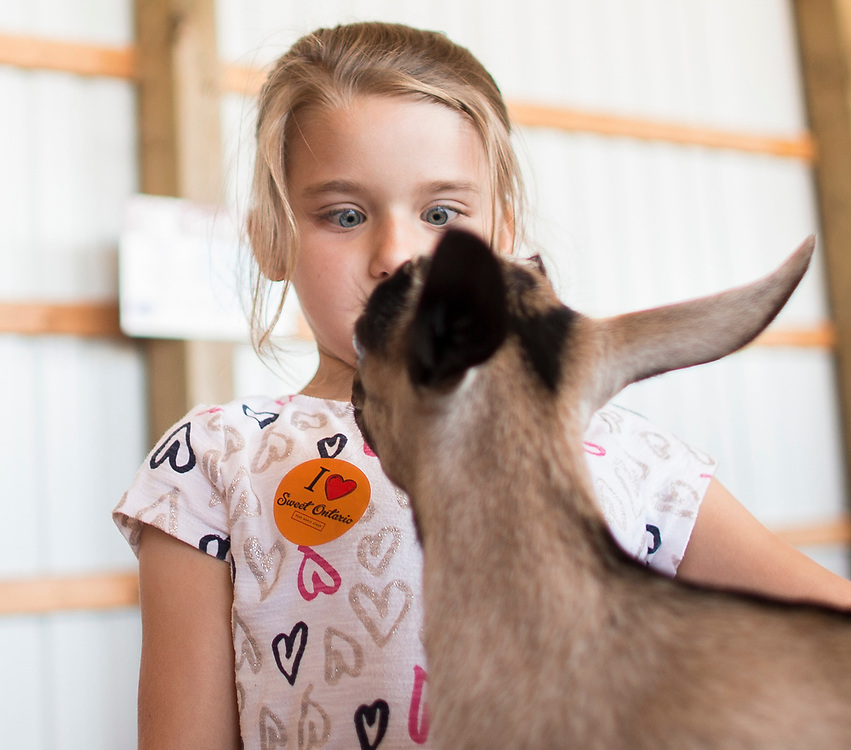 Sophia Palazoloa (6) gets a close up with a goat during the Breakfast on the Farm event near Shedden, Ontario, Saturday, June 24, 2017.<br /> Farmers Forum/ Geoff Robins
