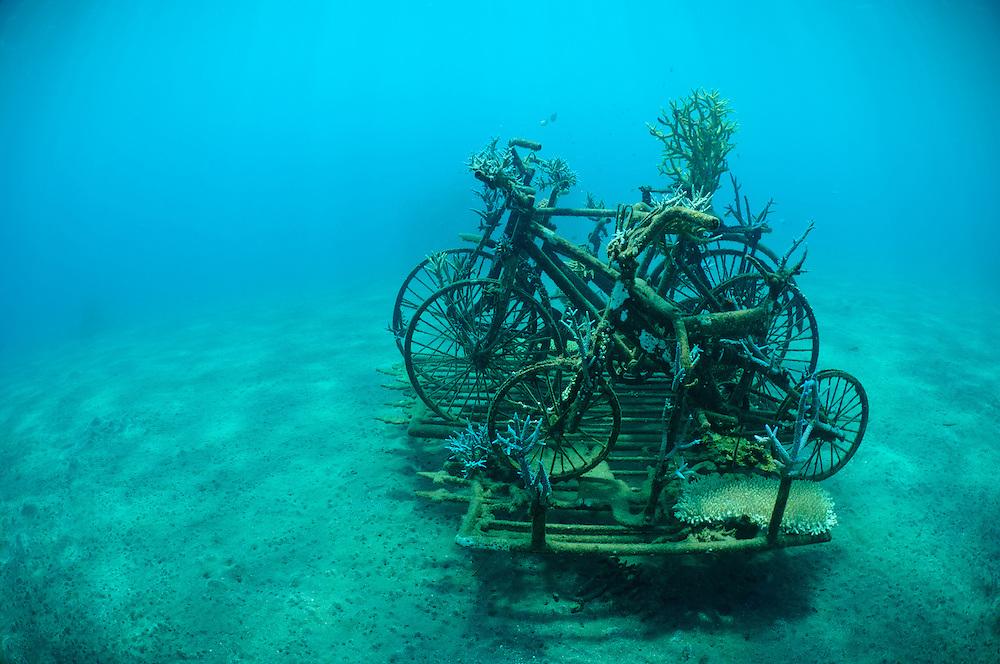 A Biorock structure partially covered in hard corals, Pemuteran, Bali, Indonesia.
