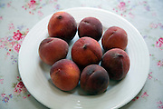 Peaches on white plate on floral kitchen tablecloth