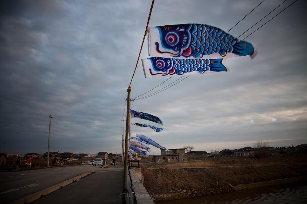 Ishinomaki  Shimodai  Koinoburi  - 11 mars 2012.Shimodai est un quartier en front de mer qui se trouve a louest dIshinomaki. Dans cette partie de la ville, il nexiste aucun relief et leau sest enfoncée profondément à lintérieur des terres. Le 11 mars 2012, sur le pont qui marque lentrée du quartier sont dressés des Koinuburi en mémoire des enfants disparus ce jour là.  Habituellement, les Koinoburi sont dressés début mai lorsquun garçon de la famille atteint les 5 ans. Plus loin se trouve une crèche et une école qui furent totalement submergées.
