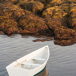 A row boat moored next to seaweed at low tide on Star Island, Rye, New Hampshire. Isles of Shoals.