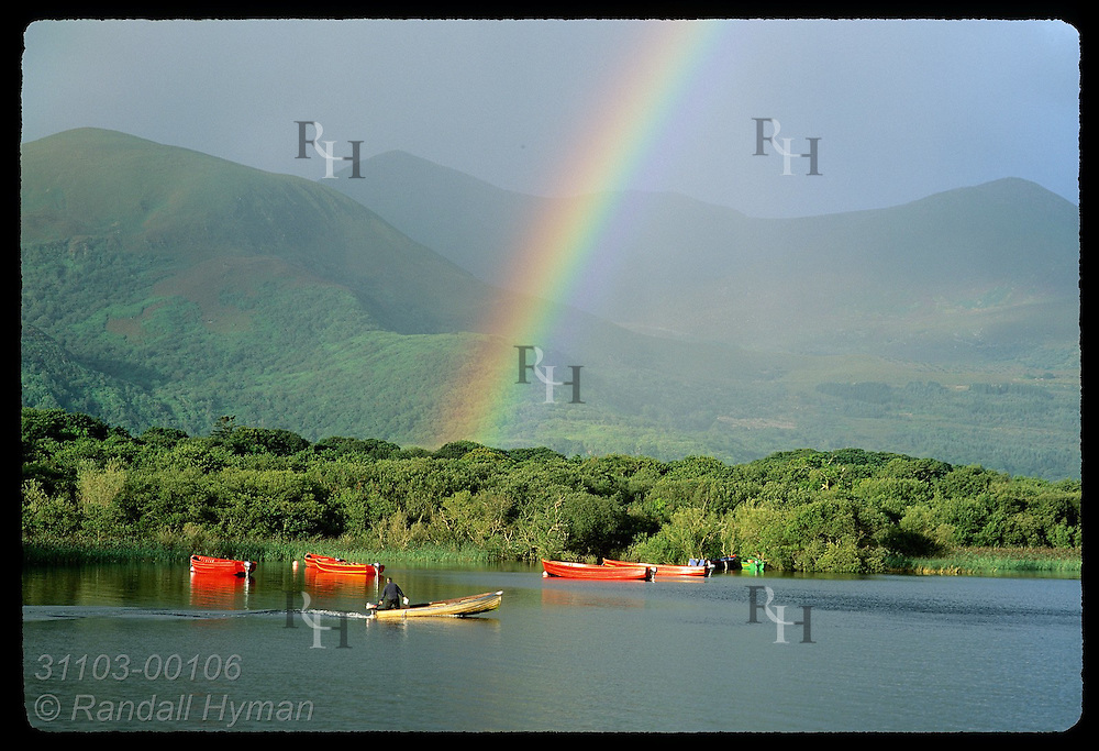Early morning rainbow arches over mtns, Ross Island & red boats on Lough Leane as man cruises by in boat Killarney N.P., Ireland.