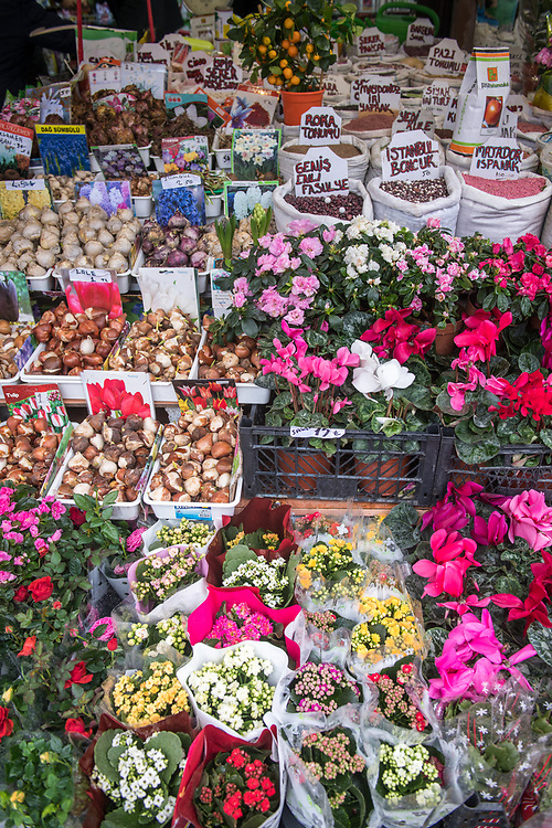 High-angle view of an array of vibrant flower and bulbs on display for sale at outdoor marketplace, Istanbul, Turkey.