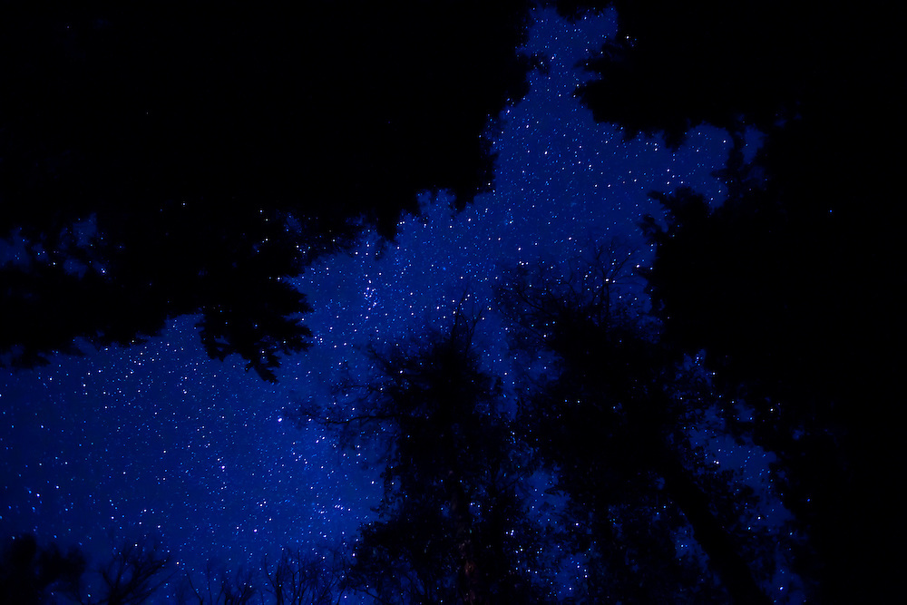 Redwood trees are silhouetted against the starry night sky in northern California northern California
