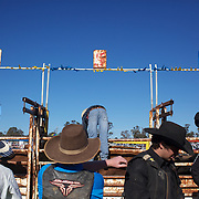 Cowboy's prepare their mounts in the schute during the Novice Bull riding event at the Branxton Rodeo at Branxton, Hunter Valley,  New South Wales, Australia, on Saturday 17th October 2009.  Photo Tim Clayton