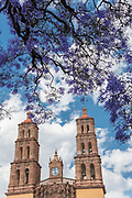 Parroquia Nuestra Señora de Dolores Catholic Church in English the Church of our Lady of Sorrows in the Plaza Principal with flowering Jacaranda tree in Dolores Hidalgo, Guanajuato, Mexico. Miguel Hildago was a parish priest who issued the now world famous Grito - a call to arms for Mexican independence from Spain.