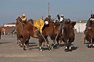 Mongolia. Camel polo. during camel festival. Gobi desert.. in Winter for Tsagan sar , the mongol new year  Bulgan -
