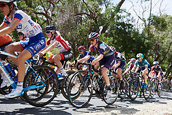 Tiffany Cromwell (AUS) on the Stirling climb on Stage 3 of 2020 Santos Women's Tour Down Under, a 109.1 km road race from Nairne to Stirling, Australia on January 18, 2020. Photo by Sean Robinson/velofocus.com