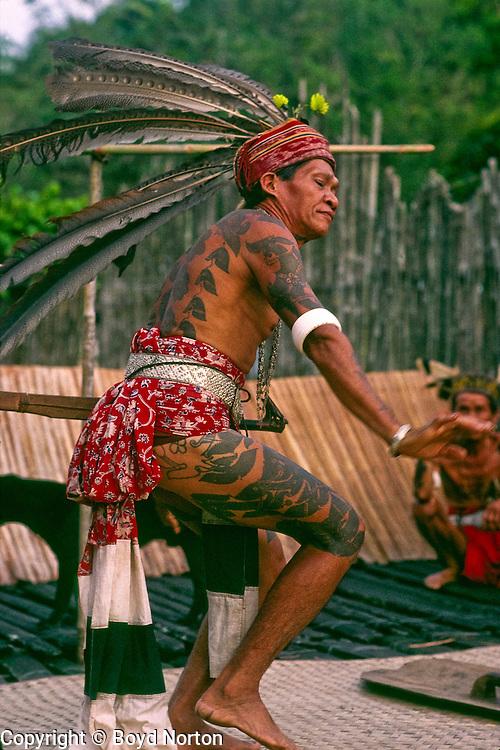 Iban people, former headhunters, doing hornbill dance in longhouse, Sarawak, Borneo, Malaysia