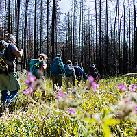 hikers walking through a a burn in the badger two medicine area montana