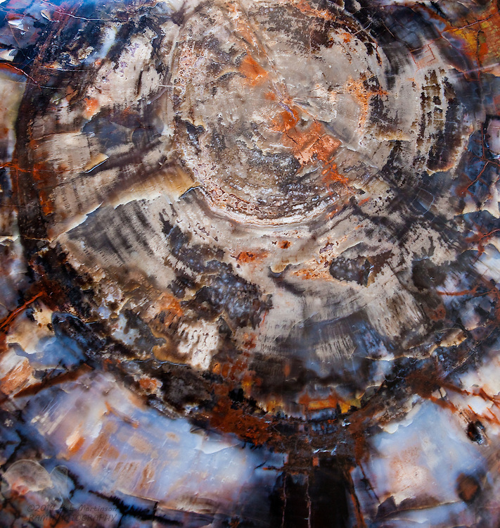 A cross-cut and polished piece of petrified wood sits in a visitor center at the south end of the National Petrified Forest, near Holbrook, Arizona.