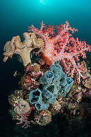 Soft Corals and Sponges on Reef Wall<br /> <br /> Shot in Indonesia