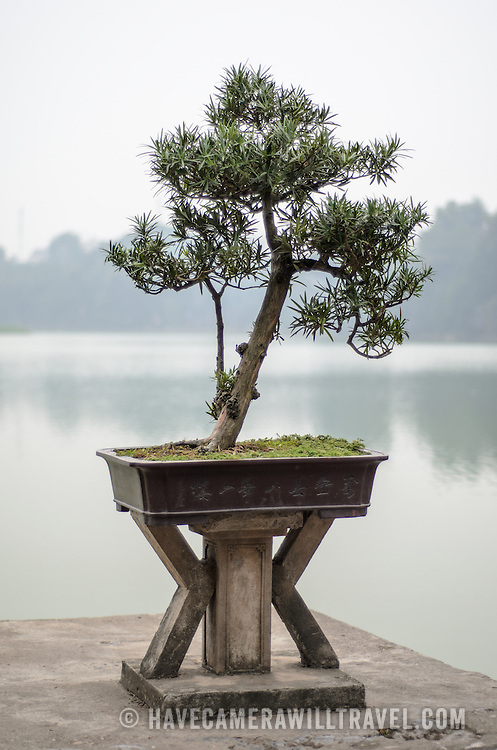 A bonsai plant on a wooden pedestal at the Temple of the Jade Mountain, with Hoan Kiem Lake in the background. Hanoi.