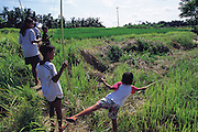 Indonesian children hunt dragonflies with a specialized capture and retrieve method?each individual dragonfly is spotted, then snagged with sticky jack fruit sap on the end of an extended bamboo whip in the rice fields, Batuan, Bali, Indonesia. (Man Eating Bugs page 60 Top)