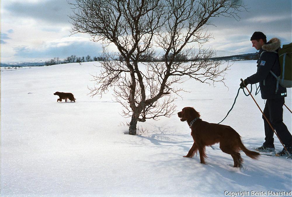 unghundtrening Stugudal, Biko i front..negativ i hvit perm m/svart mønster Hunting grouse in Norway.