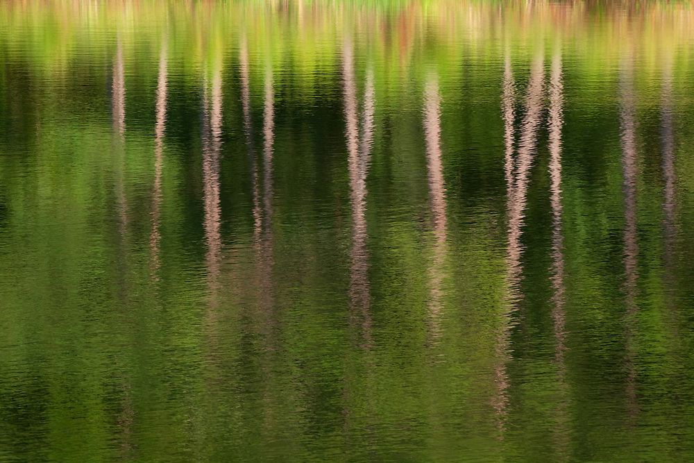 Pine trees reflecting in a pond as the evening light paints ripples and shadows on the water.<br /> -Savannah, GA