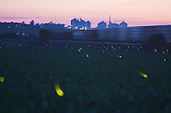 Lightning Bugs, Creston, IL.