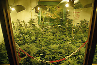 November 1996, Amsterdam, Netherlands --- Marijuana plants are cultivated at Positronics, a grow shop that supplies everything necessary for growing marijuana including plants, seeds, soil, lights, and water pumps. --- Image by © Owen Franken/CORBIS