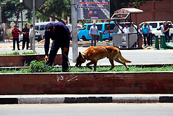 A policeman guides a police dog to look for undiscovered bombs near the presidential palace following a bomb blast in Cairo, Egypt, June 30, 2014. Two police officers were killed and several other security personnel were wounded in two blasts near the presidential palace in Cairo. No group has yet claimed responsibility for the attacks. EXPA Pictures © 2014, PhotoCredit: EXPA/ Photoshot/ Ahmed Gomaa<br /> <br /> *****ATTENTION - for AUT, SLO, CRO, SRB, BIH, MAZ only*****
