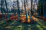 The setting winter sun, lights up last summers bracken.