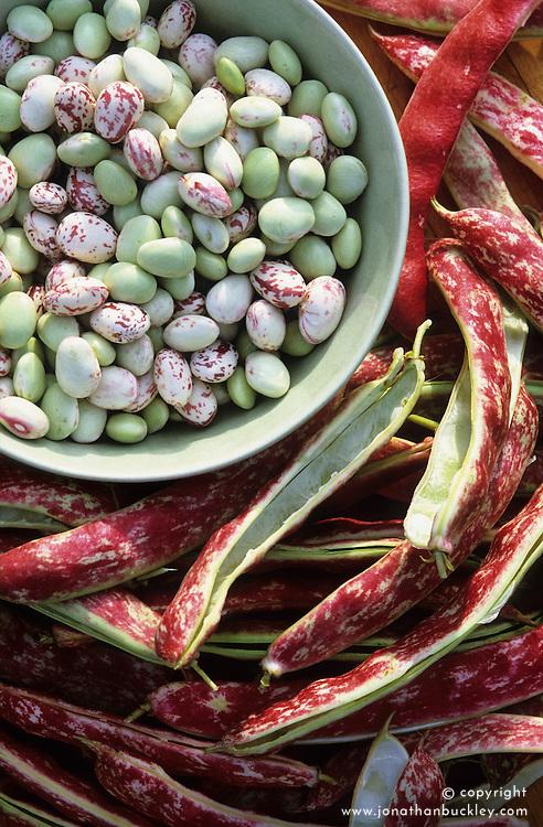Borlotti beans. Lingua de Fuoco 2