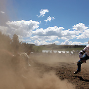 Roy Tisdale from Middlemarch in action in the Rope and Tie competition during the Millers Flat Rodeo. Otago, New Zealand. 26th December 2011