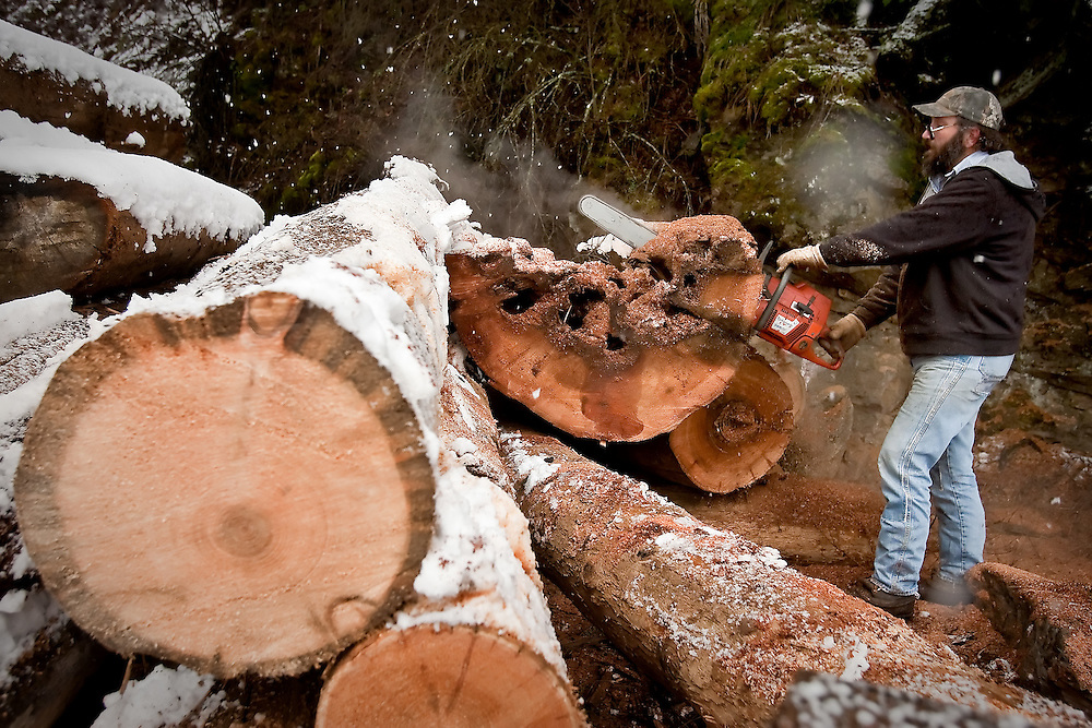 JEROME A. POLLOS/Press..Steve Walson saws through a large cedar log during a spring snowfall Thursday in a wooded area on the side of Coeur d'Alene Lake Drive.