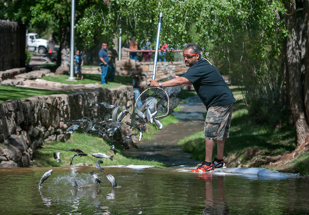 em060217b/a/Santa Fe City Councilor Ron Trujillo dumps a net load of rainbow trout into the Santa Fe River near the State Land Office in Santa Fe, Friday June 2, 2017. These are among the 500, 9 to 11 inch rainbows, stocked in the river for the Santa Fe Kid's Fishing Derby Saturday morning. The derby opens at 7 a.m. for kids 11 and under. After noon everyone is encouraged to fish. There will also be raffle tickets available for the kids to win several donated prizes.  (Eddie Moore/Albuquerque Journal)