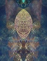 Inner Space Series 5