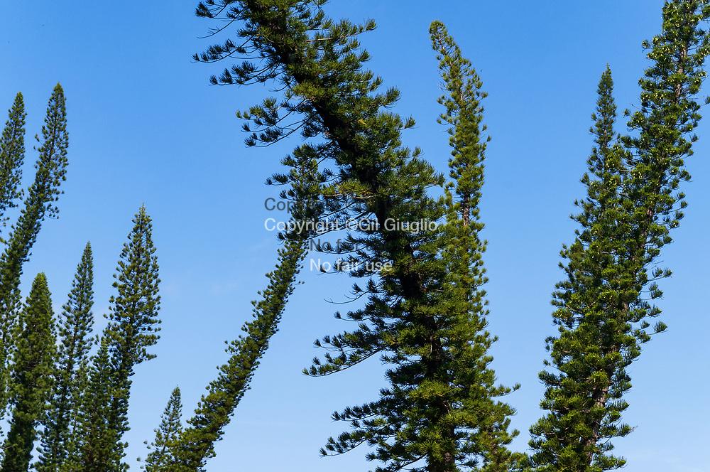 Nouvelle Calédonie, Province sud,  plage du Rocher de Bourail, côte ouest, envrirons de Bourail // New Caledonia, French territory of Pacific, beach of Bourail Rock on the west coast, area of Bourail