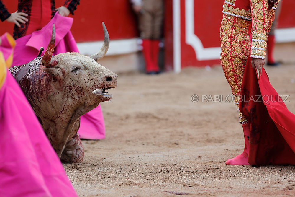 PAMPLONA, SPAIN - JULY 13: Bullfighter Ivan Fandino (R) performs with a Fuente Ymbro's fighting bull on the eighth day of the San Fermin Running Of The Bulls festival on July 13, 2013 in Pamplona, Spain. The annual Fiesta de San Fermin, made famous by the 1926 novel of U.S. writer Ernest Hemmingway 'The Sun Also Rises,' involves the running of the bulls through the historic heart of Pamplona, this year for nine days from July 6-14.  (© Pablo Blazquez)