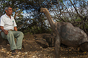 'Lonesome George' Giant Galapagos Tortoise (Geochelone elephantopus abingdoni) from Pinta Island and Fausto Llerena the National Park Guard who brought George from Pinta in the 70's. GALAPAGOS ISLANDS<br /> Of the 11 sub-species surviving in Galapagos now  'Lonesome George' is the last one of his sub-species and now lives in captivity in the Charlse Darwin Station on Santa Cruz island.<br /> ECUADOR.  South America<br /> ENDEMIC TO GALAPAGOS