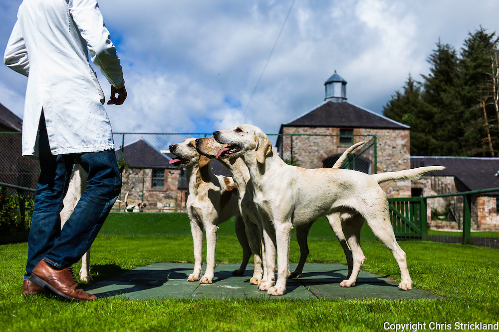Abbotrule, Bonchester Bridge, Hawick, Scotland, UK. 19th July 2015. Huntsman Johnny Richardson works with hounds on the showing slabs.
