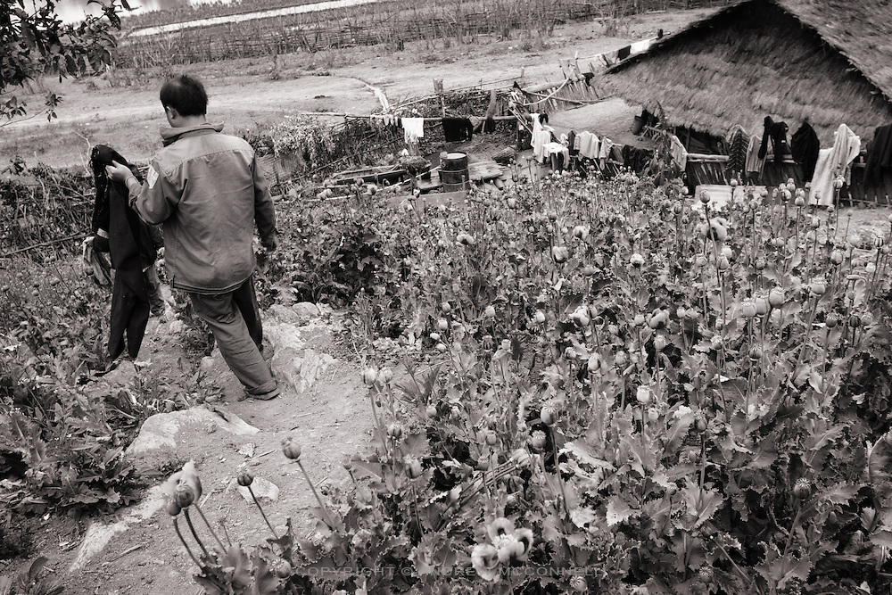 Opium farmer in Northern Laos. The CIA are said to have funded much of the Secret War from Opium trafficking.