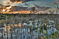 The setting sun deep in the Florida Everglades.