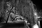 April 22, 2014<br /> A Weeping Willow crosses the path along the L'ill river in Strasbourg, France.<br /> ©2014 Mike McLaughlin<br /> www.mikemclaughlin.com<br /> All Rights Reserved