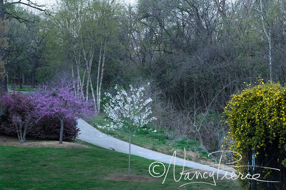 Irwin Creek Greenway at Raziere park, spring blooms